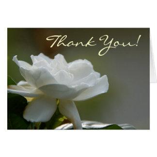 Cartões de agradecimentos do Gardenia