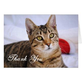 Cartões de agradecimentos do gato de gato malhado