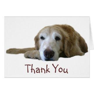 Cartões de agradecimentos do golden retriever