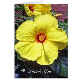 Cartões de agradecimentos do hibiscus