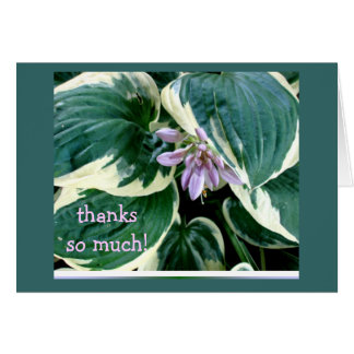 Cartões de agradecimentos do Hosta