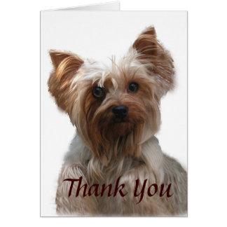 Cartões de agradecimentos do yorkshire terrier
