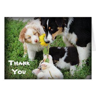 Cartões de agradecimentos dos Aussies dos azul-céu