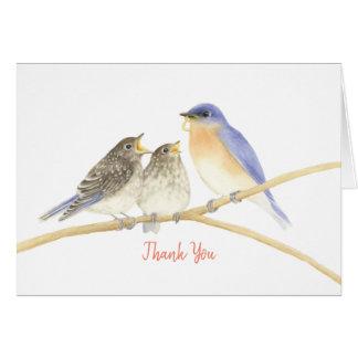 Cartões de agradecimentos dos Bluebirds