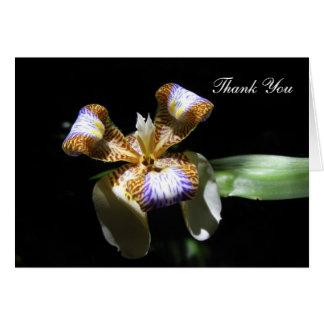 Cartões de agradecimentos - flor da íris no fundo