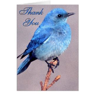 Cartões de agradecimentos ocidentais do Bluebird