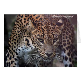 Cartões de agradecimentos persas do leopardo