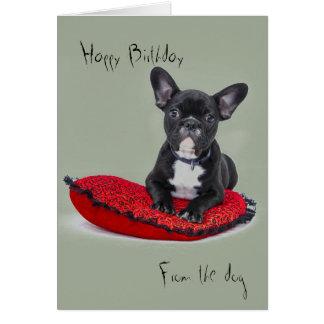 Cartões de aniversários do cão