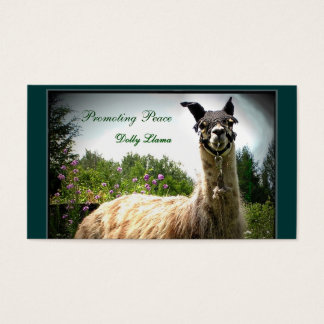 Cartões de Busininess do lama da zorra