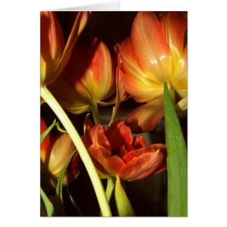 Cartões de cumprimentos das tulipas