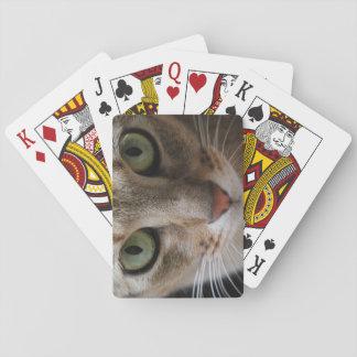 Cartões de jogo do olhar fixo do gato cartas de baralho
