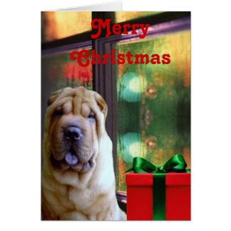 Cartões de Natal de Shar-pei do chinês