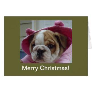 Cartões de Natal ingleses do filhote de cachorro