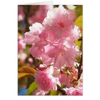 Cartões de nota da flor de cerejeira