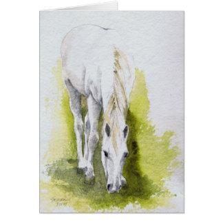 Cartões de nota do cavalo branco