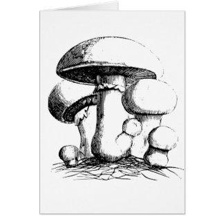 Cartões de nota dos cogumelos de prado