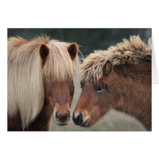 Cartões de nota islandêses do cavalo