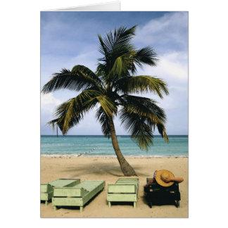 Cartões de nota tropicais da palmeira
