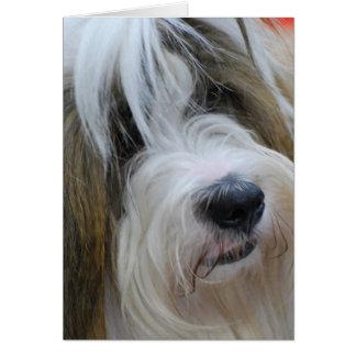 Cartões de Terrier tibetano