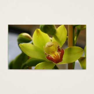 Cartões de visitas da orquídea