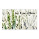 Cartões de visitas do costume do campo de trigo