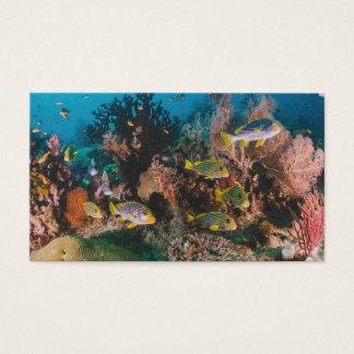 Cartões de visitas do costume do recife de corais