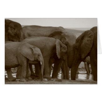 Cartões do elefante para uma causa