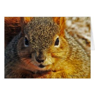 Cartões do esquilo do quintal
