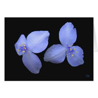 Cartões do vazio da flor do Spiderwort