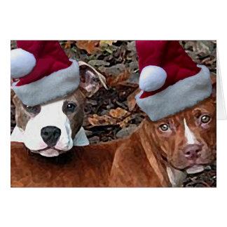 Cartões dos filhotes de cachorro de Pitbull do