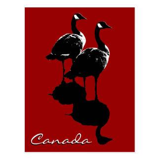 Cartões dos gansos de Canadá dos cartão da