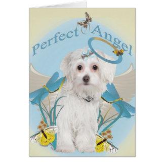 Cartões perfeitos malteses do anjo
