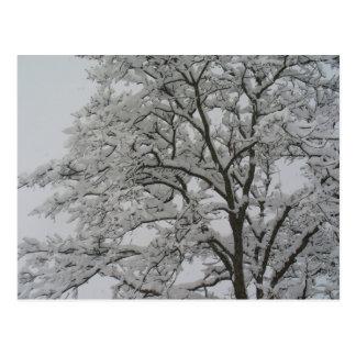 Carvalho no cartão da neve