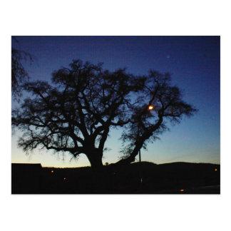 Carvalho no crepúsculo no cartão de Paso Robles