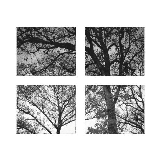 Carvalhos preto e branco impressão em tela