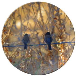 Casal romântico do pássaro do pardal no fio, pratos de porcelana