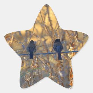 Casal romântico em um fio, foto do pássaro do adesito estrela