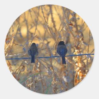 Casal romântico em um fio, foto do pássaro do adesivo
