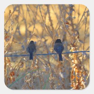 Casal romântico em um fio, foto do pássaro do adesivo quadrado