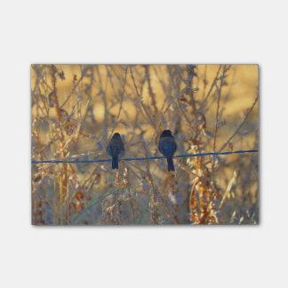 Casal romântico em um fio, foto do pássaro do sticky note