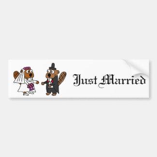 Casamento engraçado dos noivos do castor adesivo