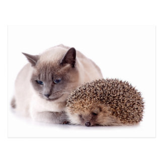 cat and hedgehog cartão postal