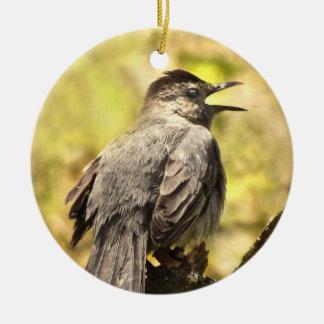 Catbird cinzento que canta seu ornamento da canção