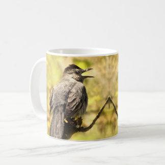 Catbirds cinzentos do canto caneca