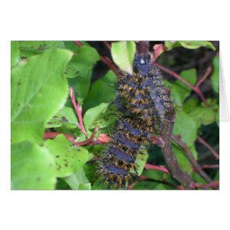Caterpillar grande (3 polegadas de comprimento) cartão comemorativo