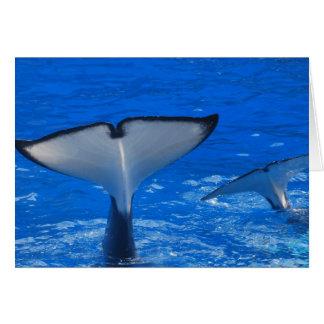 Cauda de um cartão da baleia