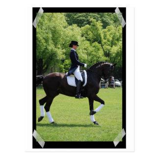 Cavaleiro da mostra do cavalo do adestramento no c cartao postal
