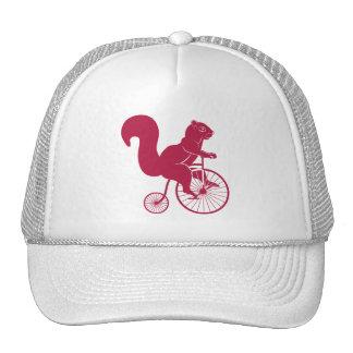 Cavaleiro do esquilo na bicicleta velha boné