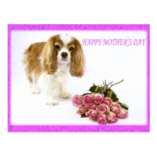 Cavalier felizes do dia das mães com buquê cor-de- cartões postais