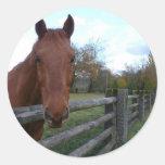 Cavalo amigável pela cerca adesivos em formato redondos